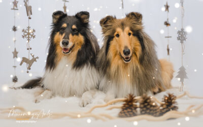 Merry Christmas and happy new year 2021 from Regan and Nanuk